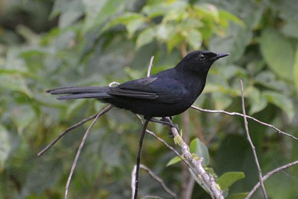 Gran Bahia Principe Mexico Birds 2014