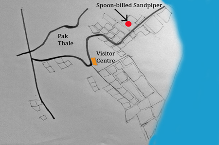 Spoon-billed Sandpiper map